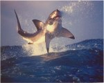 Now we find out sharks can fly. Really?